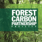 Carbon Fund Risks Undermining REDD Readiness