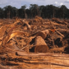 Discriminatory Forestry Regulations and REDD projects in Indonesia