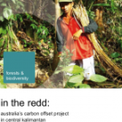 In the REDD: New report from Friends of the Earth International about the Kalimantan Forests and Climate Partnership