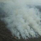 Up in flames. Tripa peatswamp forest and Indonesia's moratorium