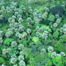 NGOs demand that Forest Investment Program in Indonesia is postponed until demands are met