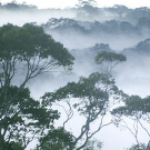 Forest Scientists: REDD is not low hanging fruit and has potential for catastrophic impacts on biodiversity