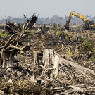 Indonesia's Forest Investment Plan endorsed despite criticisms from civil society