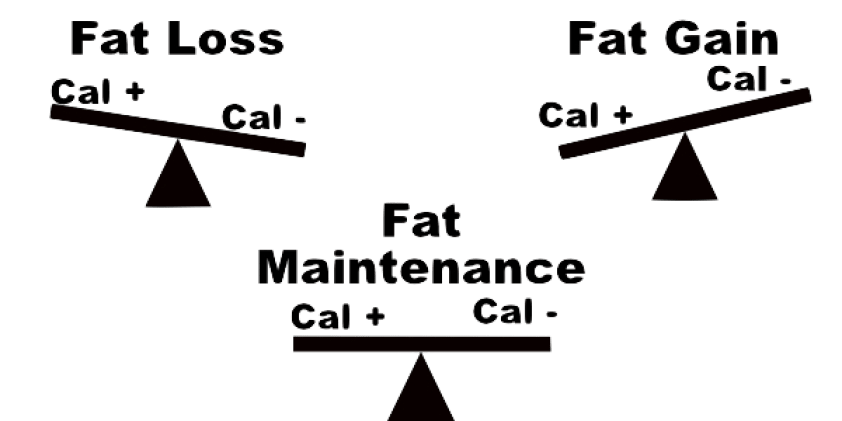 Image result for energy level of fat