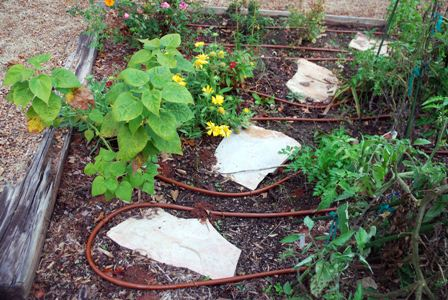Netafin drip irrigation installed in 2008.
