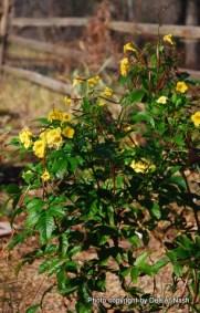 Esperanza still blooming
