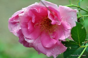 A little raindrops on roses. What more can I say?