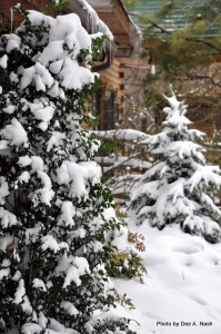 Front border of evergreens on March 21, 2010. Oklahoma sometimes gets snow for spring break. Fun, huh?