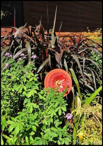 Pennisetum purpureum 'Princess Caroline' grass with Senorita Rosalita cleome.
