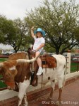 Bear rides a bull in the stockyards at Ft. Worth in 2007