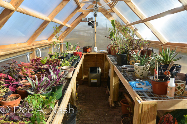 Inside the greenhouse, you can see the controls at the back of the house, along with the electric heater.