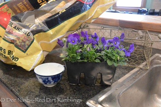 A teacup, the wire basket, blue violas and potting soil.