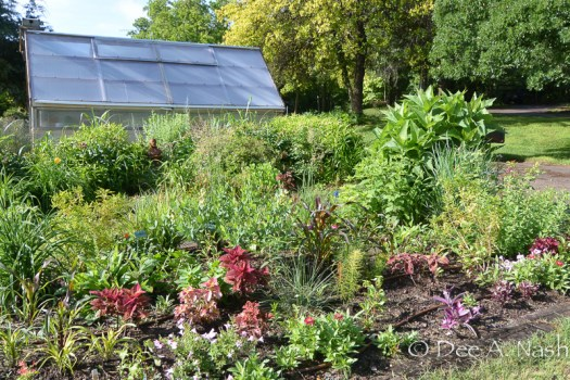 I'm trying to show some different views of the garden. This is the two beds that face our street. On the other side of the greenhouse is the potager.