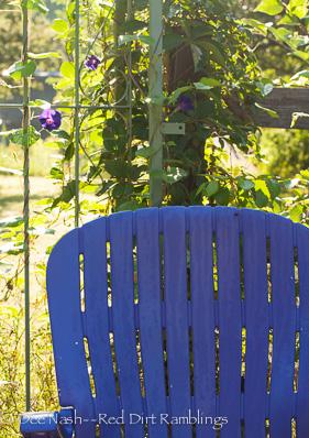 Purple chair with 'Grandpa Otts' morning glory