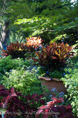 Fall garden with crotons shining in the fading light.