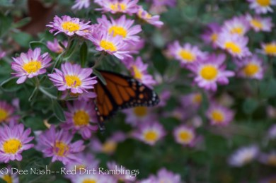 Monarch on 'Will's Wonderful' mum. If you can only have one mum, this should be the one.