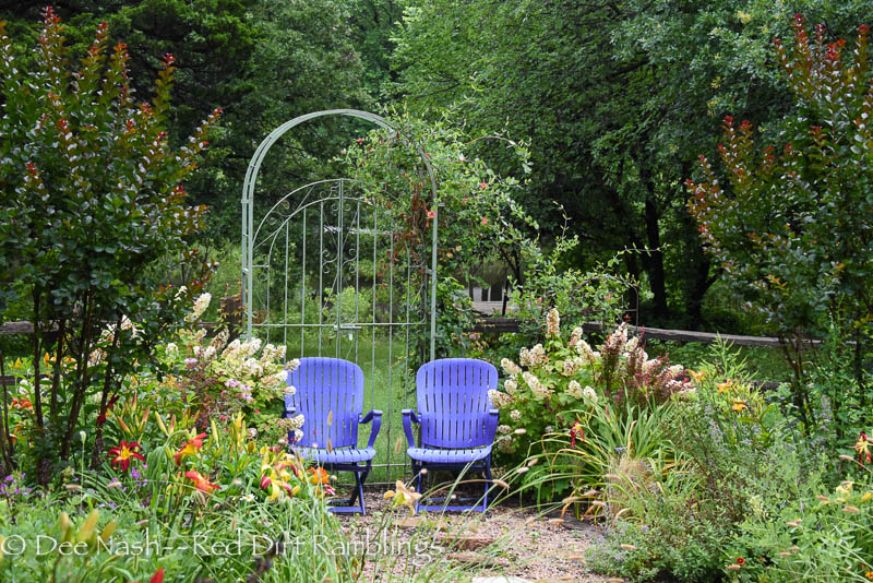Back garden with Hydrangea quercifolia 'Ruby Slippers' and my purple chairs. The crapemyrtles are 'Pink Velour.'