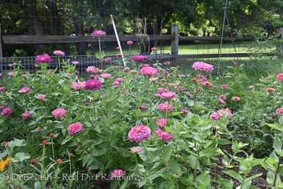 Cool Crayon Colors mix zinnias from Renee's Garden seeds.