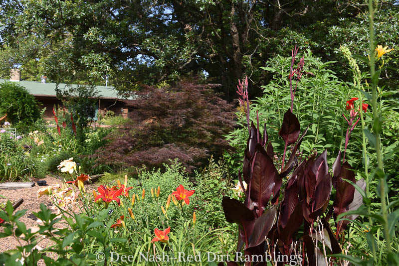 'Tamukeyama' Japanese maple and a dark canna.