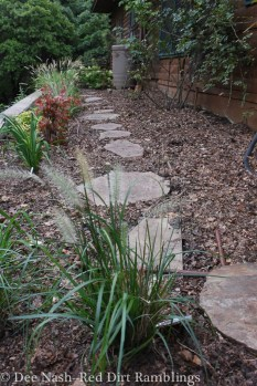 This border once held roses, but after Rose Rosette Disease ravaged it, I replaced them with grasses, perennial hibiscus and daylilies. Then, I mulched the whole thing in shredded leaves.