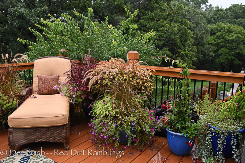 Pots on the deck in the rain.