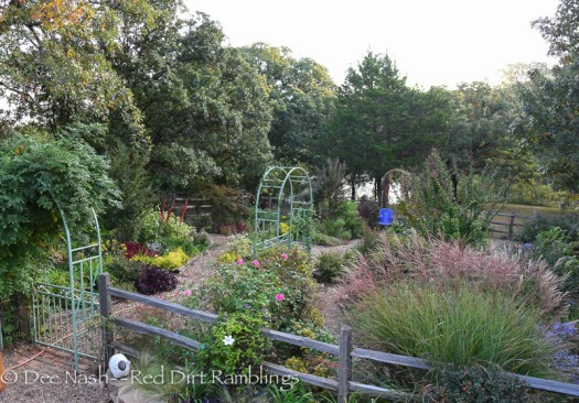 Overall view of the back garden in October. Garden Bloggers' Bloom Day