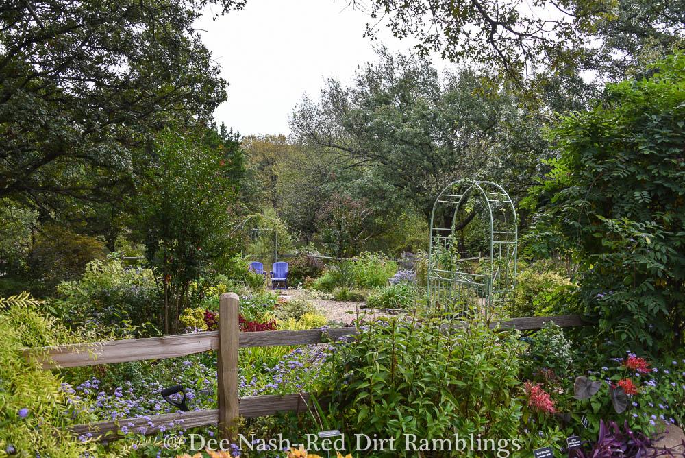 Back garden in October.