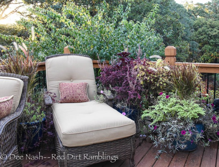 Chaise longue on the deck surrounded by blooming coleus, and other fab plants still hanging tough.