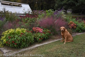 Maddie posing in front of the street bed. The pink grass is muhly grass.
