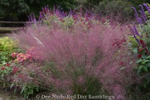 Pink muhly grass always reminds me of my friend, Faire, who turned me onto this pink confection.