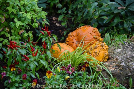Pumpkins, peppers and pansies make a great trio in a fall southern garden.