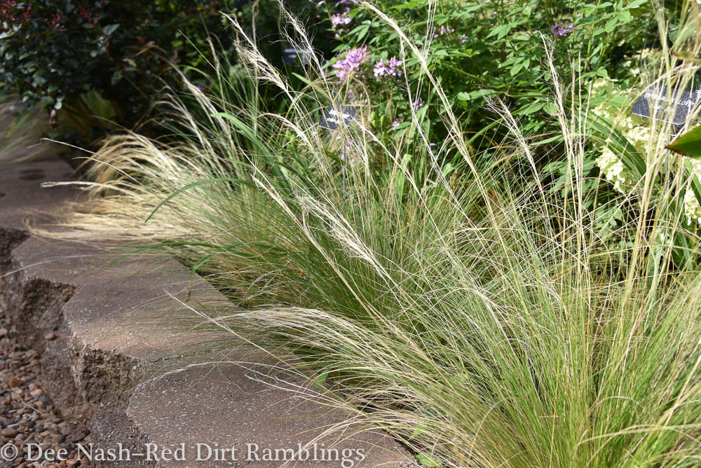 Nassella tenuissima, Mexican feather grass, planted along the edge of a border softens the concrete blocks.