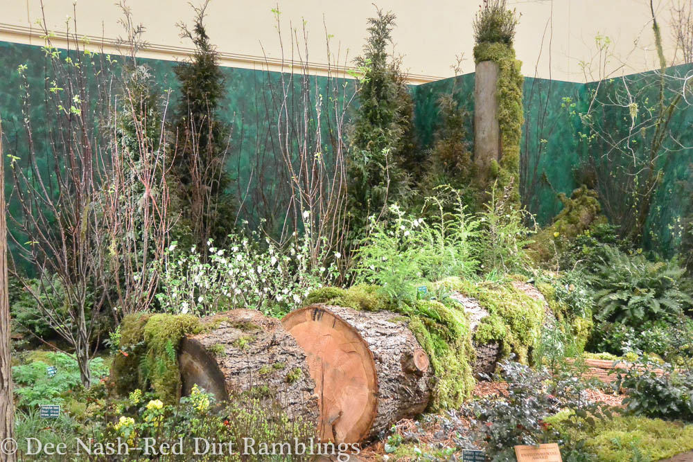 The HOH: America's Rainforest, created by the Washington Park Arboretum and the Arboretum Foundation and designed by Phil Wood and Bob Lilly