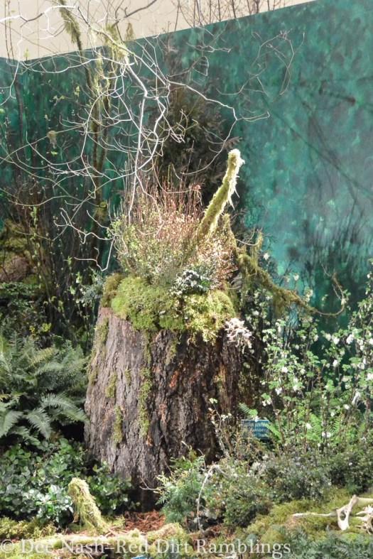 America's Rainforest Northwest Flower & Garden Show --Dee Nash-3