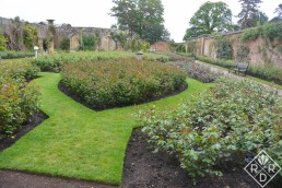 Another view of Hever Castle rose garden.