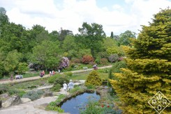 Rock garden and visitors