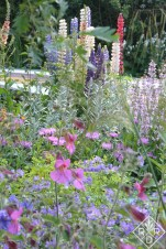 Plantings in the Brewin Dolphin Garden – Forever Freefolk