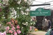 David Austin exhibition garden
