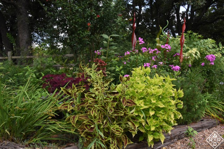 'Wasabi' coleus and another in the back garden bed.