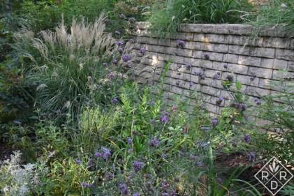 Verbena bonariensis with 'Adagio' maiden grass and baptisia.