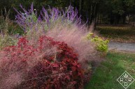 Pink muhly grass from the opposite side of the garden bed.