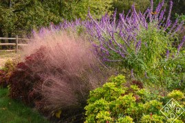 Pink muhly grass with Mexican bush sage and a coleus.