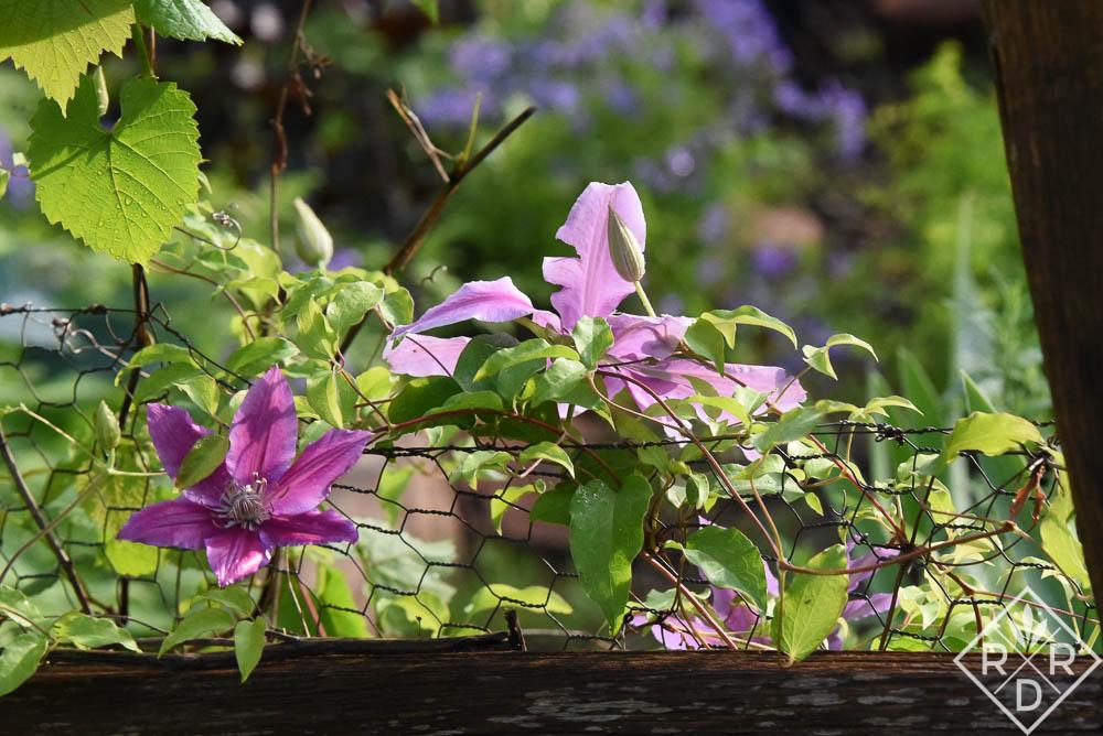 Rain-soaked garden