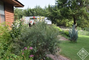 In the distance, you can see two of my favorite Orienpet lilies blooming, 'Conca d'Or' and 'Scheherazade.'