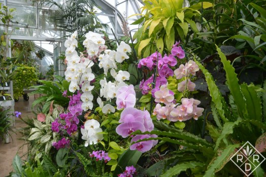 Part of orchid collection inside greenhouse