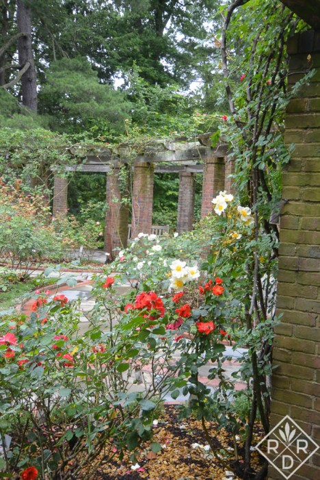 Part of the rose garden at Hillwood. At the beginning of June, it was a little past its bloom stage, but I bet it's beautiful in full bloom.