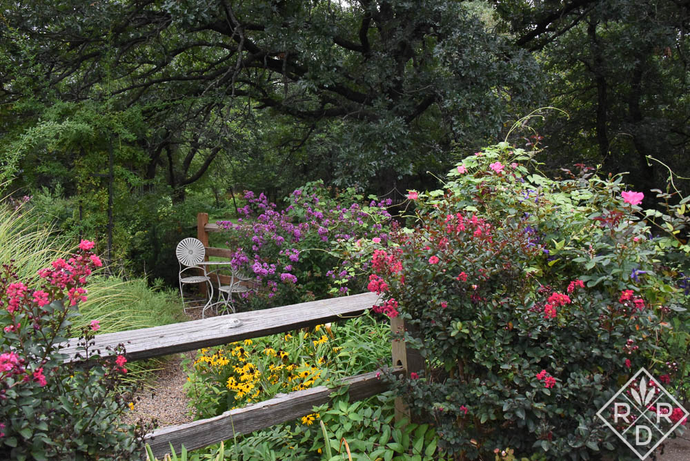 Perennial garden doing its thing. Tightwad Red crapemyrtle in front. Purple crapemyrtles behind.