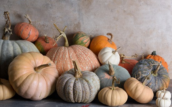 Take your pick from pumpkins and winter squash that come in a mélange of colors, textures, sizes, flavors, and shapes. They're a feast for the eyes as well as the palate. Photo by Georgianna Lane (pumpkins)