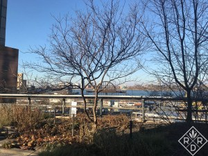 A beautiful view of the Hudson River and stark trees against a blue sky on the High Line.