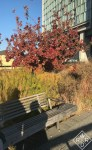 Taking photos of the flora and fauna with the sun at my back makes for interesting shadows at the High Line.